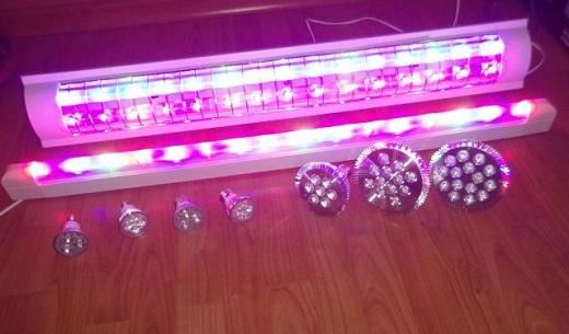 Фитолампы LED изображены на фото