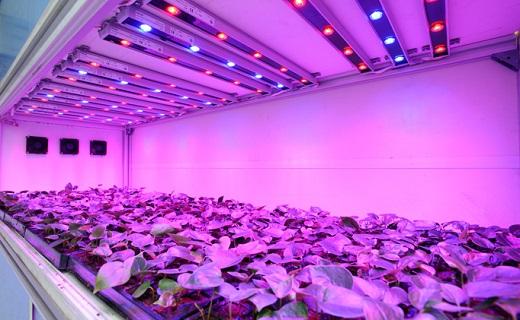 На снимке представлены светодиодные лампы для растений